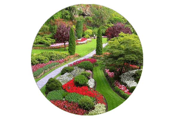 Plante Decorative Gradina