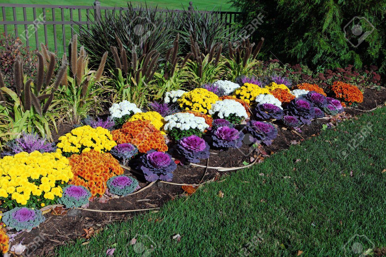 Многолетние цветы которые сажают осенью: какие 78